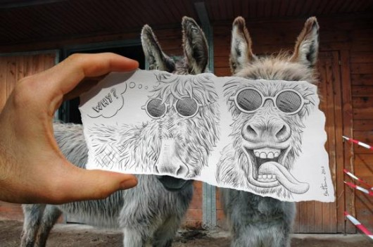 burro dibujo