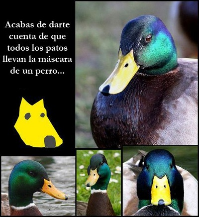 picos_patos